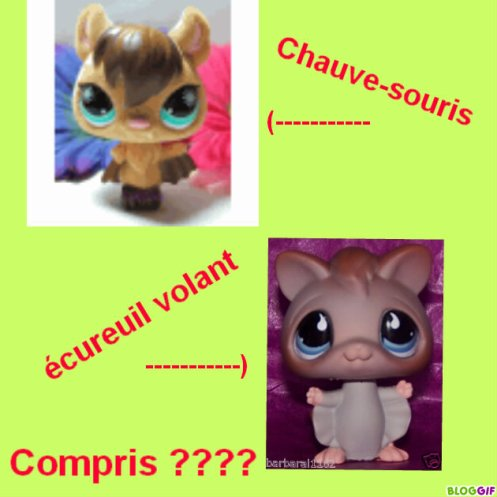 Animaux Petshops? 2698758790_small_2